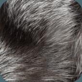 毛皮の画像